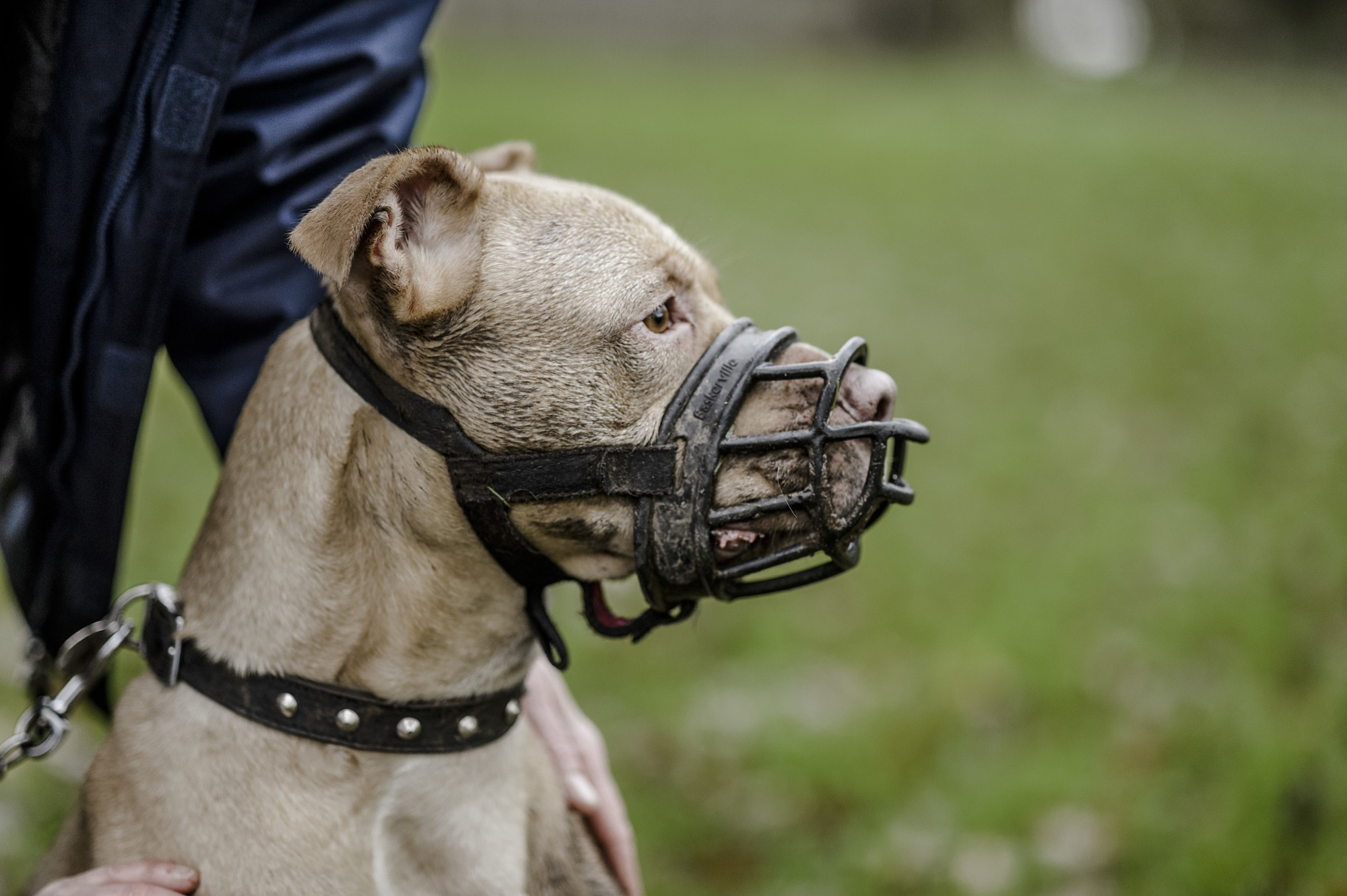 Muzzles For Huge Canines Bio thane Muzzle Is The Very Best Choice